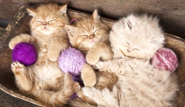 cum-elimini-mirosurile-neplacute-din-litiera-pisicii