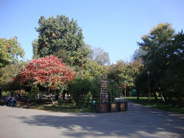 toamna in parcul cismigiu/ autumn in cismigiu park
