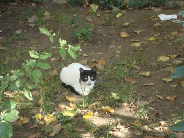 picture pisica